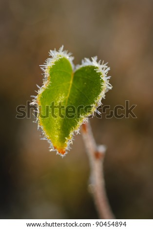 Heart shaped frozen autumn leaf covered with ice crystals. - stock photo