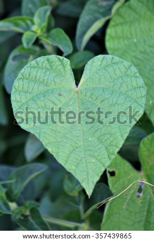 Heart shaped leaf in a garden. - stock photo