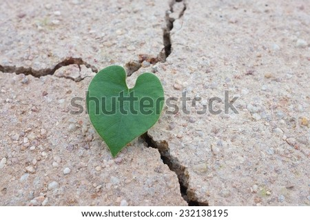 Heart-shaped leaves on dried land,cracked earth / love the world   - stock photo