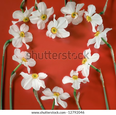Heart shaped narcis flowers on red background - stock photo