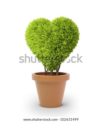 Heart shaped plant in a pot