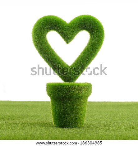 Heart shaped plant in a pot - stock photo