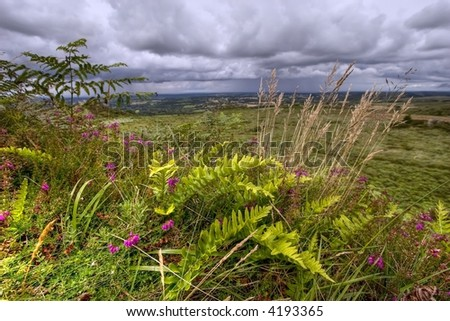 heather and fern in a wild landscape, brittany, france - stock photo
