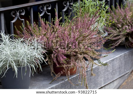 heather and other flowers in pot on a street - stock photo