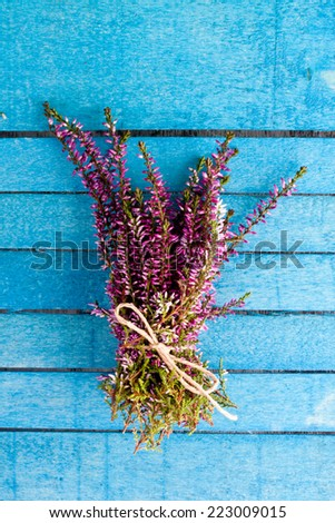 heather flower - stock photo