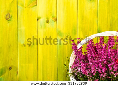 Heather flowers in a basket isolated on rustic wood background as autumn home decoration. - stock photo