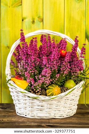 Heather flowers in a basket isolated on rustic wood background. Autumn home decoration. - stock photo
