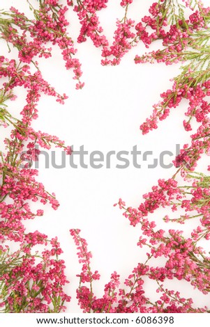 heather frame with white copy space in the middle - stock photo