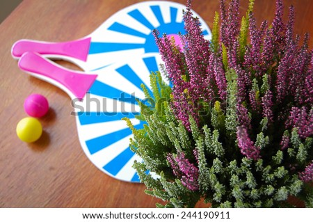 heather in pot and rackets with balls - stock photo