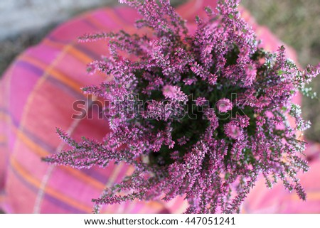 Heather in the straw basket on the pink checkered rug - stock photo
