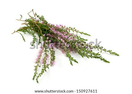 heather isolated on white backrgound - stock photo
