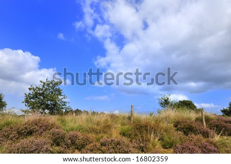 Heather with blue sky and fence