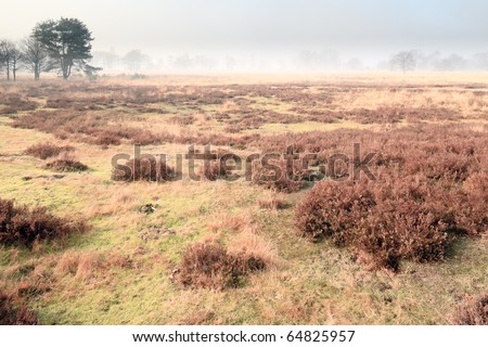 Heathland with trees in the mist, the Netherlands - stock photo