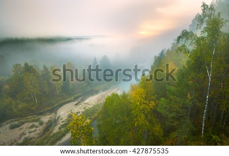 heavy fog in the national park deer streams