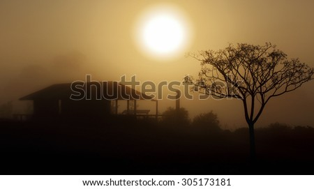 Heavy foggy morning sunrise in Central West NSW.  The thick fog obscured and reduced visibility to just a few metres but created a pretty soft dispersion ofsunlight  creating mysterious silhouettes. - stock photo