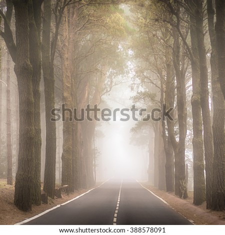 Heavy foggy road in La Esperanza forest, Tenerife, Canary Islands - stock photo