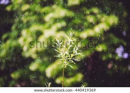 Heavy rain in park selective focus - stock photo