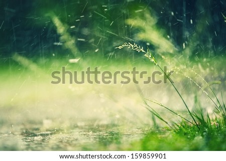 Heavy rain in park - selective focus on grass - stock photo