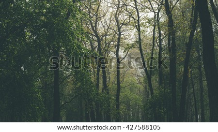 Heavy rain in summer forest, sunlight through raindrops and trees - stock photo