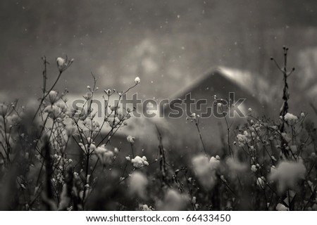 heavy snow falling in a cold december day with house in background - stock photo
