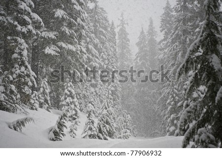 Heavy snow storm in a pine forest - stock photo