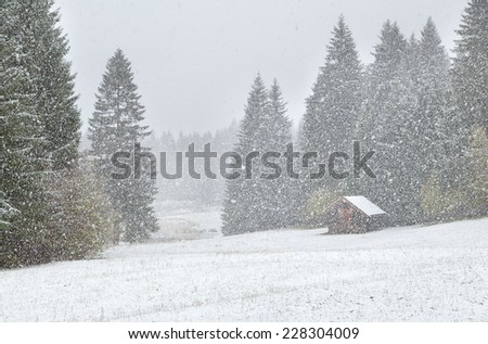 heavy snowstorm over alpine meadows in forest, Bavaria, Germany - stock photo