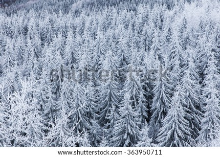 Heavy winter at Creasta Cocosului, Romania.  - stock photo