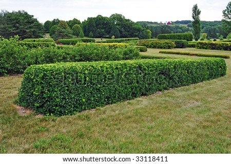 Hedge - stock photo