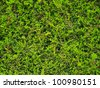 Hedge Green leaves wall background - stock photo