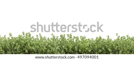 hedge or bush  isolated,Objects with Clipping Paths