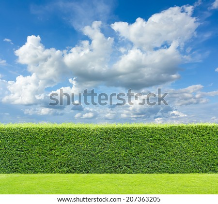 hedge with sky and grass  - stock photo