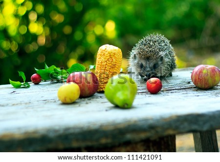 Hedgehog among fruits, apples, pears, plums and corn - stock photo
