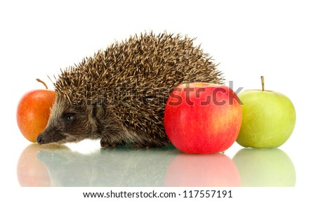 Hedgehog and apples, isolated on white - stock photo