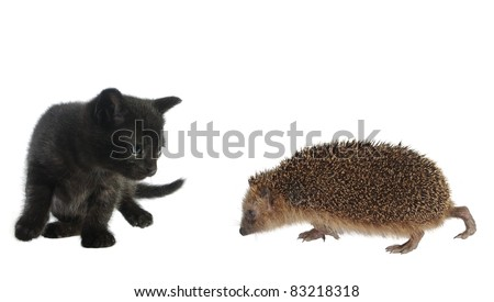 hedgehog and cat on white background - stock photo