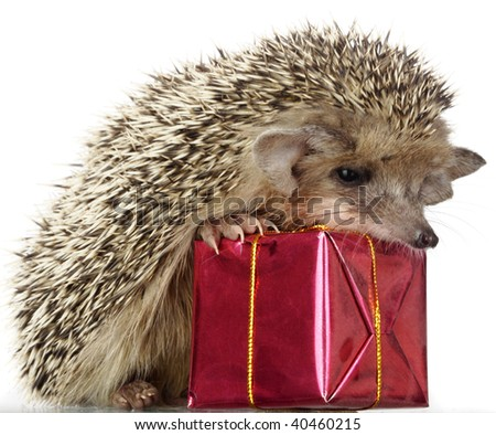 hedgehog and gift - stock photo