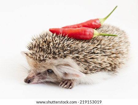 Hedgehog and red pepper on white - stock photo