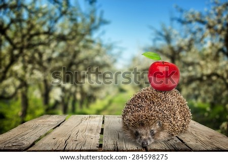 Hedgehog, Apple, Animal. - stock photo