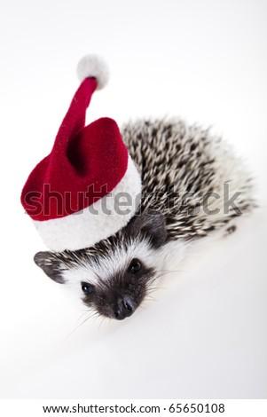 Hedgehog christmas - stock photo