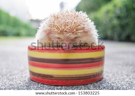 Hedgehog in a bowl - stock photo