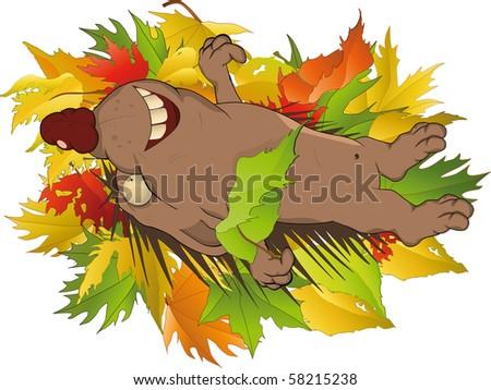 Hedgehog in wood - stock photo
