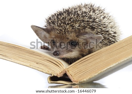 hedgehog on book - stock photo