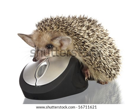 hedgehog on computer mouse - stock photo