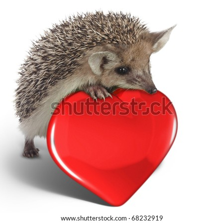 hedgehog on red heart - stock photo