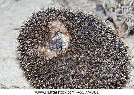 Hedgehog on the grass - stock photo