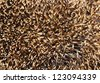 hedgehog spines for designers background - stock photo