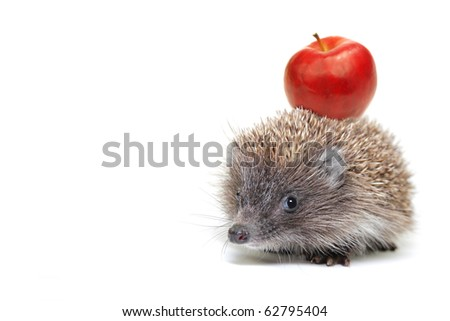 Hedgehog with apple isolated on white background - stock photo