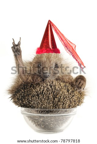Hedgehog with gesture a victory on a white background - stock photo