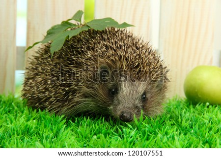 Hedgehog with leaf and apple, on grass,  on fence background - stock photo