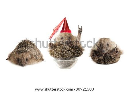 Hedgehogs isolated on a white background