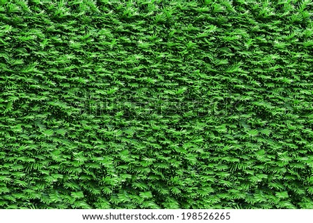 hedgerow trimmed bushes bright green closeup - stock photo